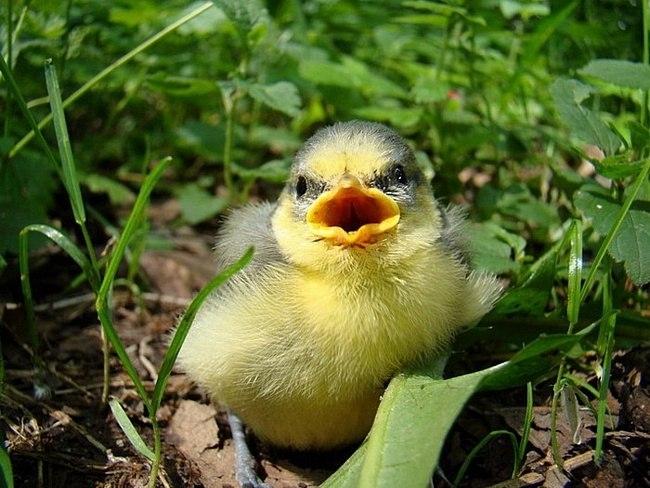 Поищите гнездо глазами и может вы сможете вернуть в него птенца