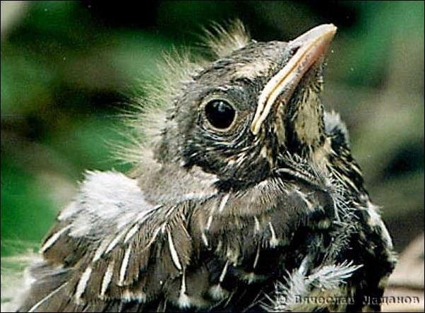 В лесопарке множество птиц