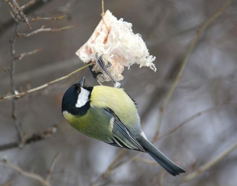 ptica1_0