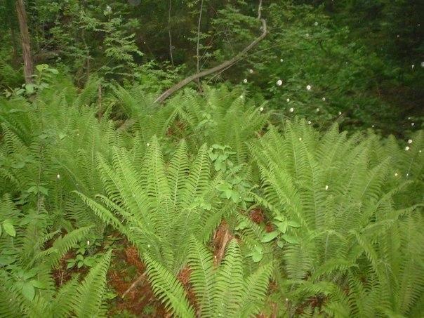Экологический квест в Токсовском лесопарке