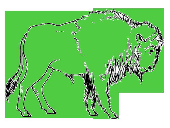 05-bison-03