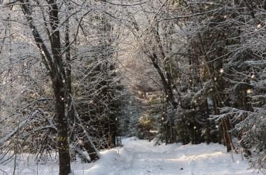 Зимние фотографии в Токсово выглядят как иллюстрации к сказкам